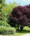 visite guidée du parc du CH La Chartreuse